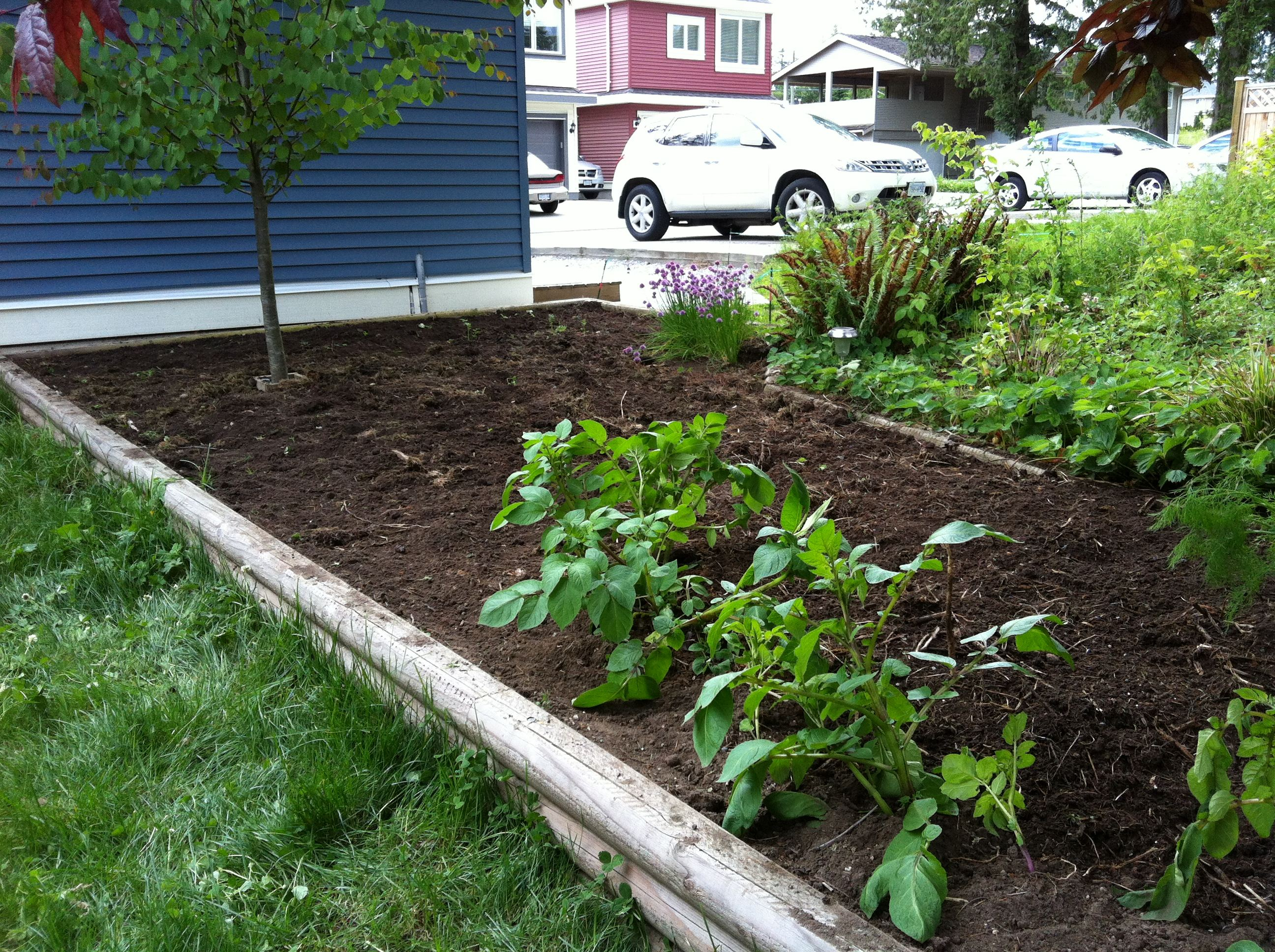weeded backyard garden - Backyard Vegetable Garden Ideas Pictures