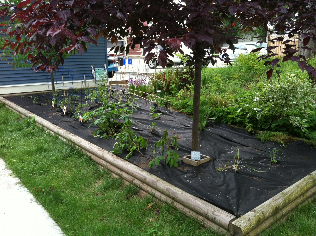 How To Plant A Vegetable Garden In Your Backyard Outdoor Goods